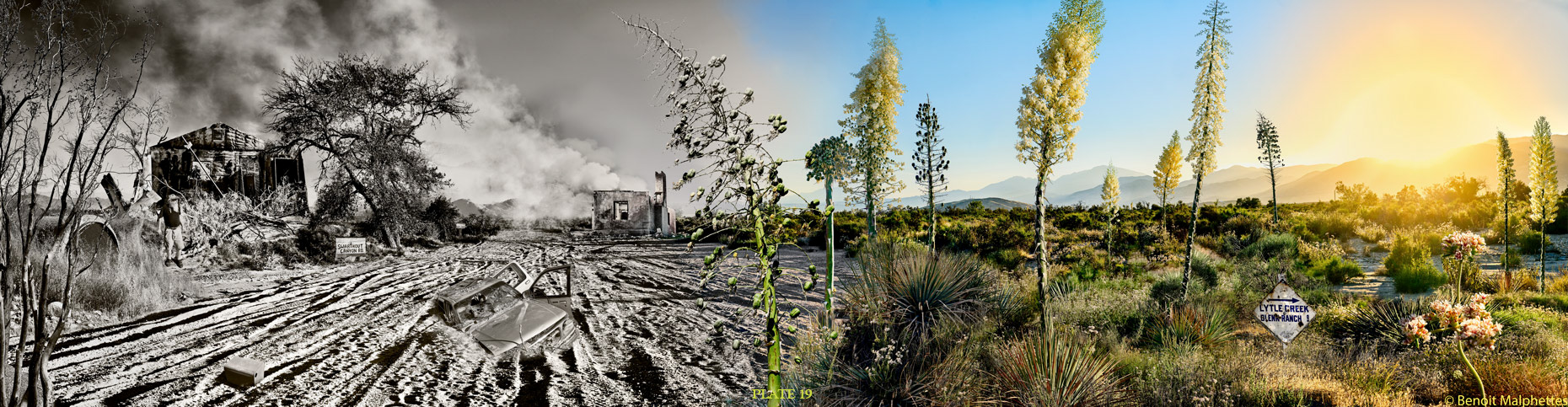 Photographic composite illustrating the Blue Cut Fire from devastation to  renewal